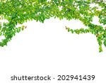 abstract of green ivy isolated... | Shutterstock . vector #202941439