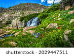 A stream on the mountainside. Mountain flowers. Mountain summer scene