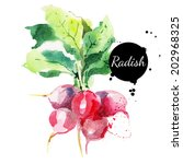 radish with leaf. hand drawn... | Shutterstock .eps vector #202968325