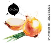 onion. hand drawn watercolor... | Shutterstock .eps vector #202968331