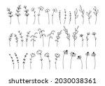 hand drawn line art botanical... | Shutterstock .eps vector #2030038361