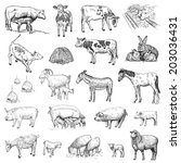 mammals. hand drawing set of... | Shutterstock .eps vector #203036431