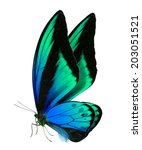 Stock photo beautiful butterfly isolated on a white background 203051521