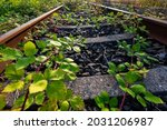 Railway Track Overgrown By...
