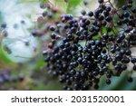 Ripe Fruits   Common Names   ...