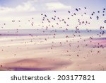 birds flying and abstract sky ... | Shutterstock . vector #203177821