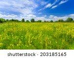 Summer landscape - stock photo