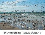 Variety Of Shore Birds...