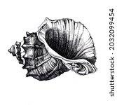 Detailed Ink Sketch Seashells...