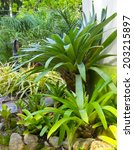 garden with bromeliads and... | Shutterstock . vector #203215897