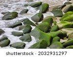 Sea Moss On Rocks By The Ocean.
