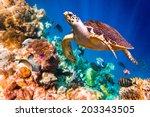 hawksbill turtle   eretmochelys ... | Shutterstock . vector #203343505