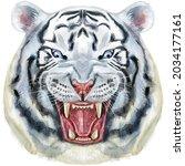 hand drawn tiger. watercolor...   Shutterstock . vector #2034177161