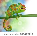 chameleon and colors | Shutterstock . vector #203429719