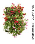 Typical Window decorated Pink and Red Flowers isolated on white, Cordoba, Spain, Mediterranean Europe - stock photo