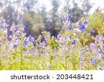 Blue Wildflowers In Sprig