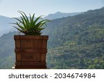 Pot With An Aloe Plant In A...