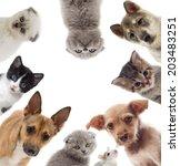 set pets | Shutterstock . vector #203483251