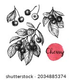 cherry set. branch with flowers ... | Shutterstock .eps vector #2034885374