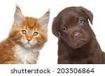 Stock photo kitten and puppy isolated on white background 203506864