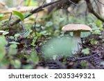 Brown Mushroom On A Brown...