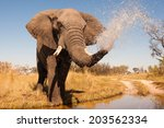 elephant spraying water with... | Shutterstock . vector #203562334