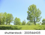 Trees Of Various Fresh Green