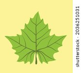 simplicity maple leaf freehand... | Shutterstock .eps vector #2036251031