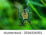 Wasp Spider On Cobweb In Summer ...