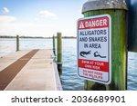 Alligator And Snake Danger...