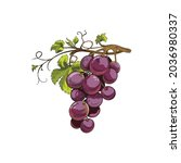 bunch of purple grape with... | Shutterstock .eps vector #2036980337