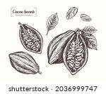 cocoa beans. chocolate. vector...   Shutterstock .eps vector #2036999747