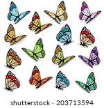 Stock vector big collection of realistic butterflies vector 203713594