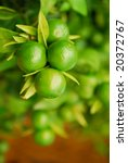 Fresh Green Citrus Fruit On A...