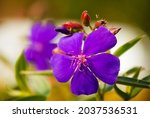Beautiful Flower In Rural...
