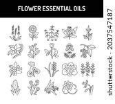 flower essential oils  olor...