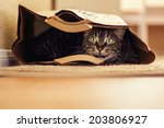 Stock photo  year old male tabby cat lying in a brown paper bag image taken indoors in reno nevada usa 203806927
