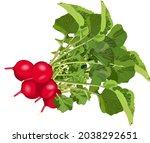 radish for banners  flyers ... | Shutterstock .eps vector #2038292651