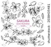 hand drawn sakura  cherry... | Shutterstock .eps vector #2038435481