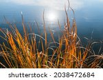 Thickets Of Reeds Near The...