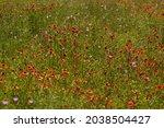 Field Of Wildflowers Near...