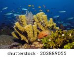 Small photo of Underwater seascape with colorful tube sponges (Porifera), feather stars and a coral grouper (Cephalopholis miniata)