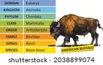 the hierarchy of biological... | Shutterstock .eps vector #2038899074