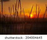 spikelets on the background of... | Shutterstock . vector #204004645