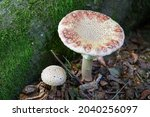 Closeup Of A Large And A Small...