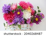 Colorful Autumn Aster Flower...