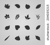 Set Of Leaves  Vector...