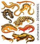 set of salamander creatures...   Shutterstock . vector #2040464831