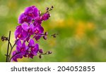 purple orchid flower close up on blurred green garden background - stock photo
