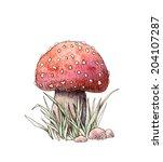 mushroom  | Shutterstock . vector #204107287